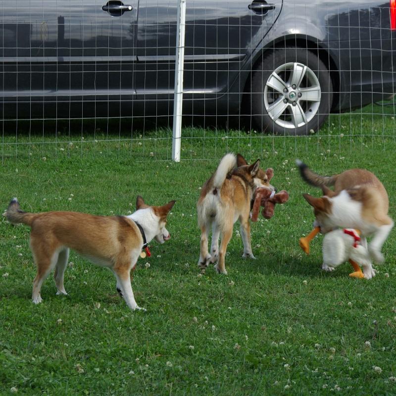 Hundene var glade for nogle af præmierne