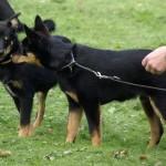 Laulu og Lupa får lige en fortrolig snak inden træningen går i gang