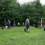 I gang med hunde-ludo
