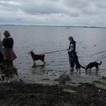 Der var mange af hundene der godt ville have våde poter