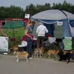 Standen med norsk lundehund
