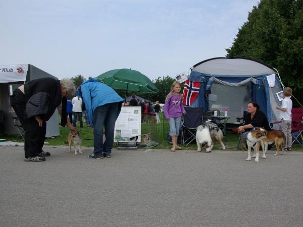 Der var mange der gerne ville hilse på hundene