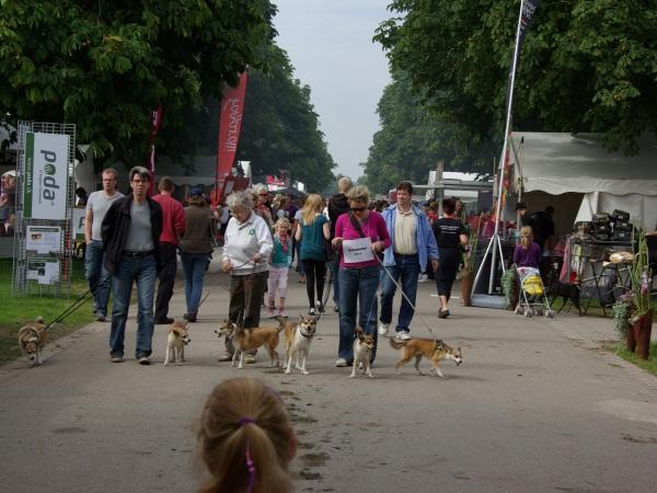 Vi gik vores egen lille raceparade gennem området for at gøre opmærksom på hundene, hvilket betød at rigtig mange fik set dem