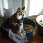 Ylva med sin nye lillesøster Uraya