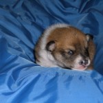Lofar 2 uger gammel