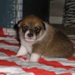 Lofar 3 uger gammel