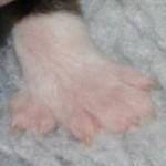 Ounas venstre forpote