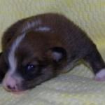 Owena 2 uger gammel