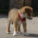 Owena 8 uger gammel