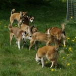 Det var svært at fange alle ti hunde på ét billede, men her er da syv