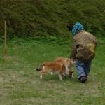 Yngste deltager i gang med at aktivere hundene