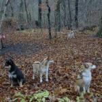 Mooja, Gaia og Keeza samt Mikkel og Havdur i baggrunden