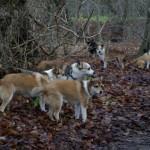 Flokken på tur: Nicco, Lita, Pickvin, Mooja, Mikkel og Keeza