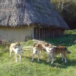 Keeza, Lita og Mikkel i jernalderlandsbyen