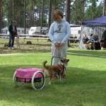 En lundehund kan også trække vogn