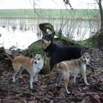 Keeza, Mooja og Gaia