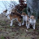 Mikkel, Niisa og Keeza