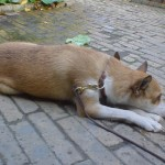 Keeza er træt efter en lang dag i Tivoli