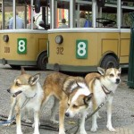 Lita, Mikkel og Keeza venter på sporvognen