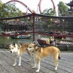 Mikkel og Keeza på broen over Tivolisøen