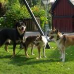 Mooja, Mikkel og Havdur ved ét af de flotte blomsterarrangementer