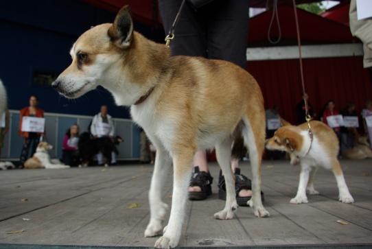 Keeza og Niisa repræsenterede Norsk lundehund på scenen