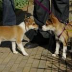 Niisa og Nema hilser på hinanden