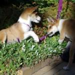 Nema og Niisa er glade for at se hinanden igen og har fundet et blomsterbed der er godt at lege i