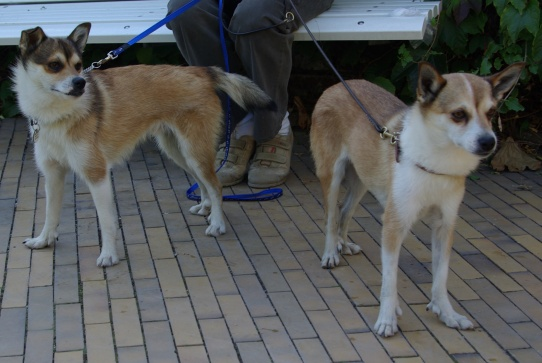 Nicco og Keeza