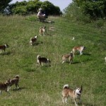 Hundene flokkedes når der kom gæster