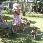 Hunde og mennesker får hilst på hinanden