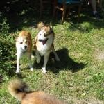 Hanhundene var meget glade for Keeza
