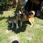Keeza var efterhånden for træt til at holde hanhundene på afstand