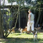 Hundene hilser på hønsene