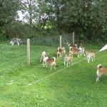 Som sædvanlig flokkedes lundehundene og gøede, når en hund af anden race nærmede sig