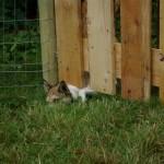 Gaia vil gerne ud til os der er på den anden side af hegnet