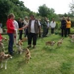 Hundene står i kø for at prøve Rally lydigheds banen