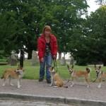 Havdur, Gaia, Humla og Smilla på sightseeing i Lund