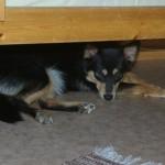 Mooja ville oftest hellere sove under sengen