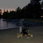 Morgentur med hundene