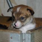 Qila 4 uger gammel