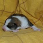 Dreng 3 - 1 uge gammel
