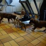 Gaias hvalpe var med hos dyrlægen da Lieväs hvalpe skulle have deres sidste dyrlægetjek