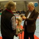 Haarlev2014-Rupis