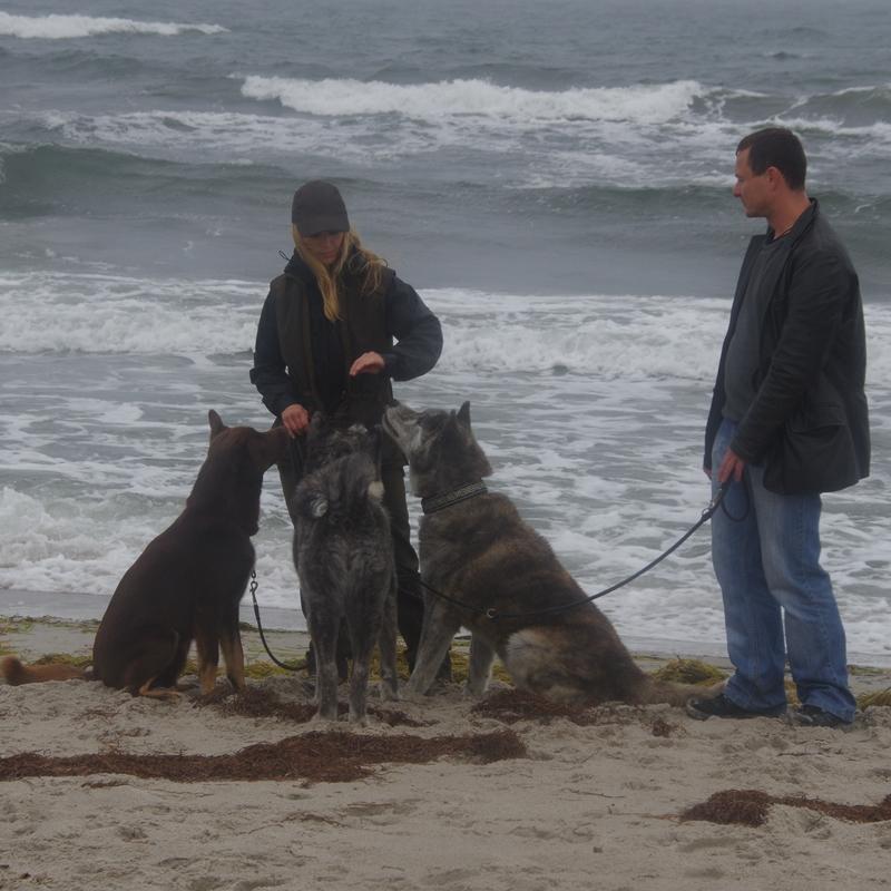 Thor (Keeza's Lunde Luonto Trombi), Kia og Leo