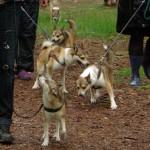 Et lille udsnit af de glade lundehunde der var på skovtur i den våde forårsskov