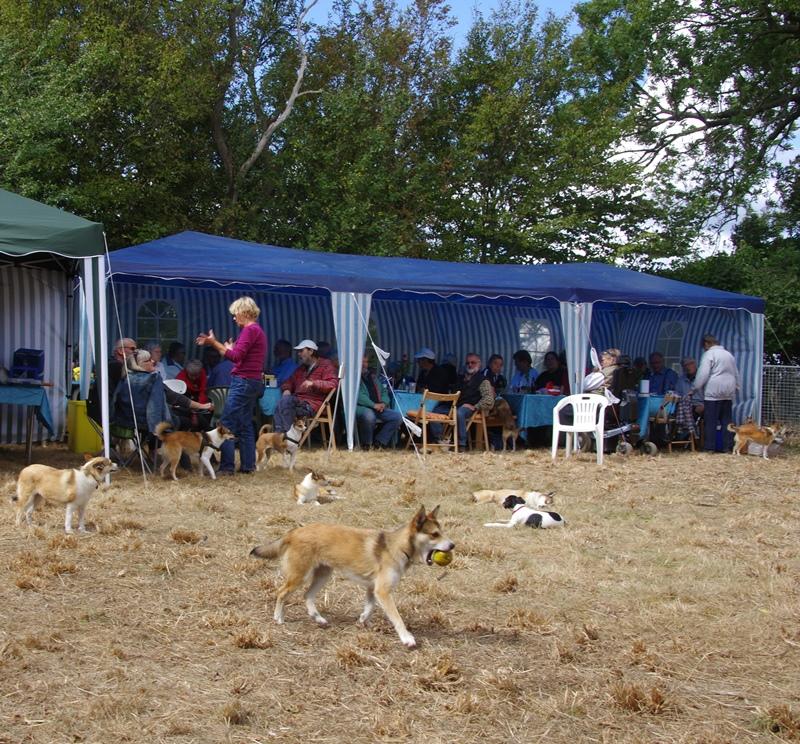 Frokosttid og hundene leger