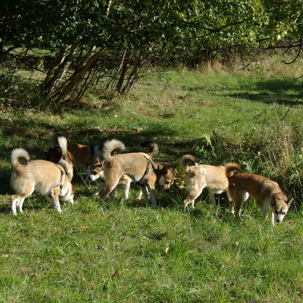 Nogle af hundene er gået på opdagelse