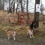 Oona, Niisa og Laulu