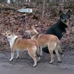 Niisa, Oona og Laulu